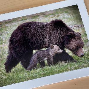 Savings: In Stock Photo Paper Prints